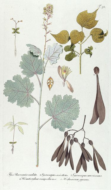 pretty antique botanical illustrations