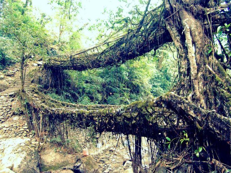 Guwahati, Shillong, Cherrapunji and Mawlynnong – All India Tourist Service