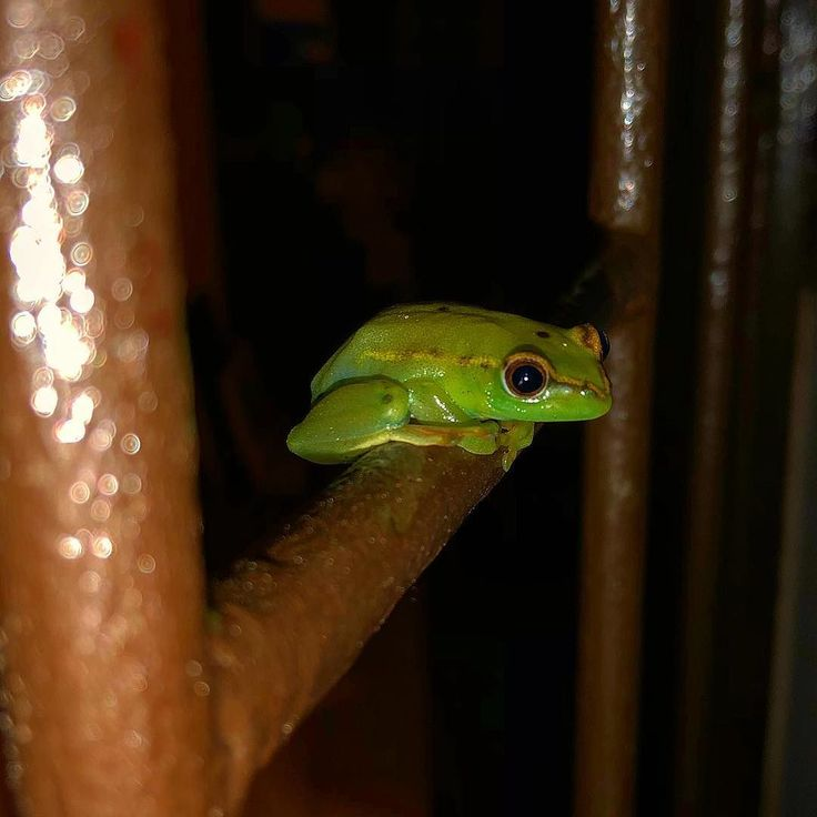 Look who was waiting for us when we got home tonight. #frogs #ballito #ID?