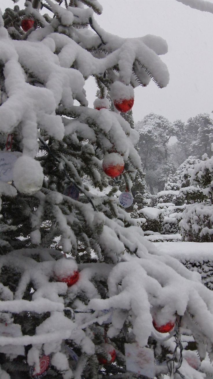 Snowing in Tripolis, Arcadia, Greece, ahead of the New Year.
