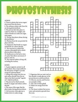 A crossword puzzle that features vocabulary words for a unit on photosynthesis.  The definitions are given as the clues and students must fill in the words in the crossword grid.