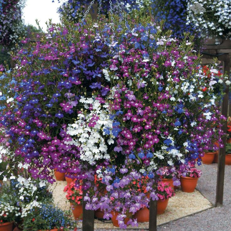 Flowers For Hanging Baskets In Winter : Best images about hanging baskets on