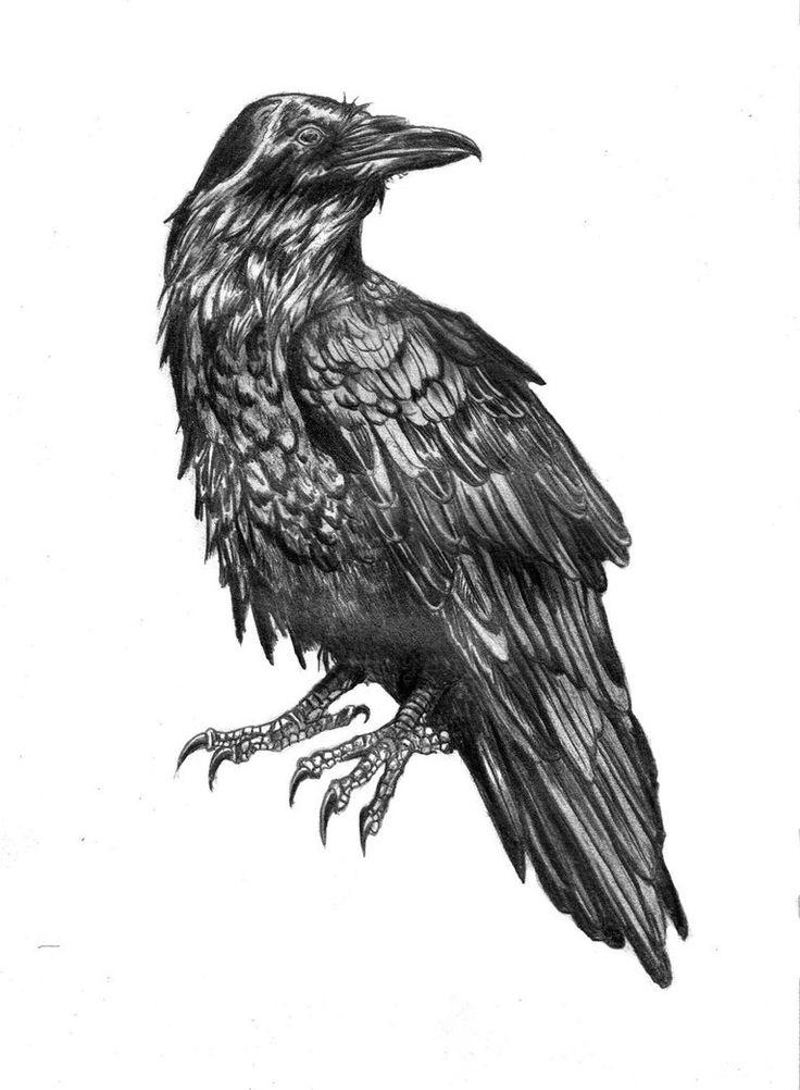 Графические картинки воронов, открытка