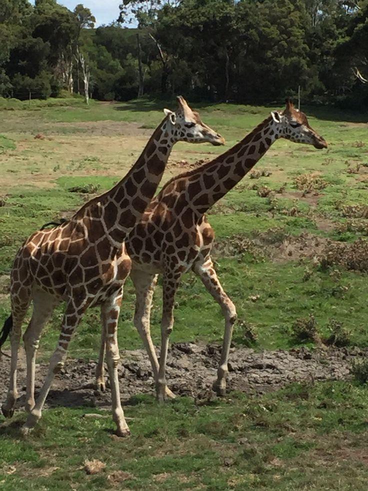 Werribee Zoo, Melbourne