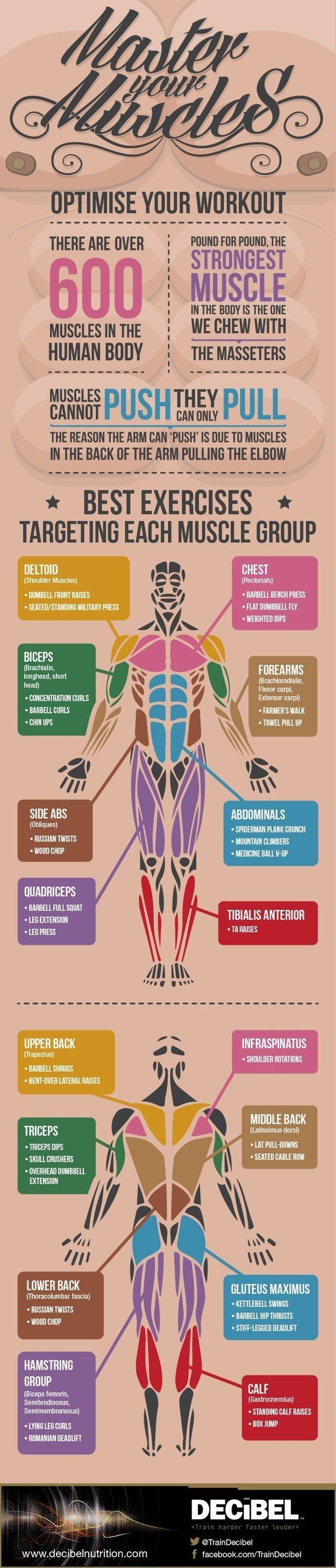 Get acquainted with some exercise basics — like your major muscle groups and the best exercises for each. | 16 Super-Helpful Charts That Teach You How To Actually Work Out
