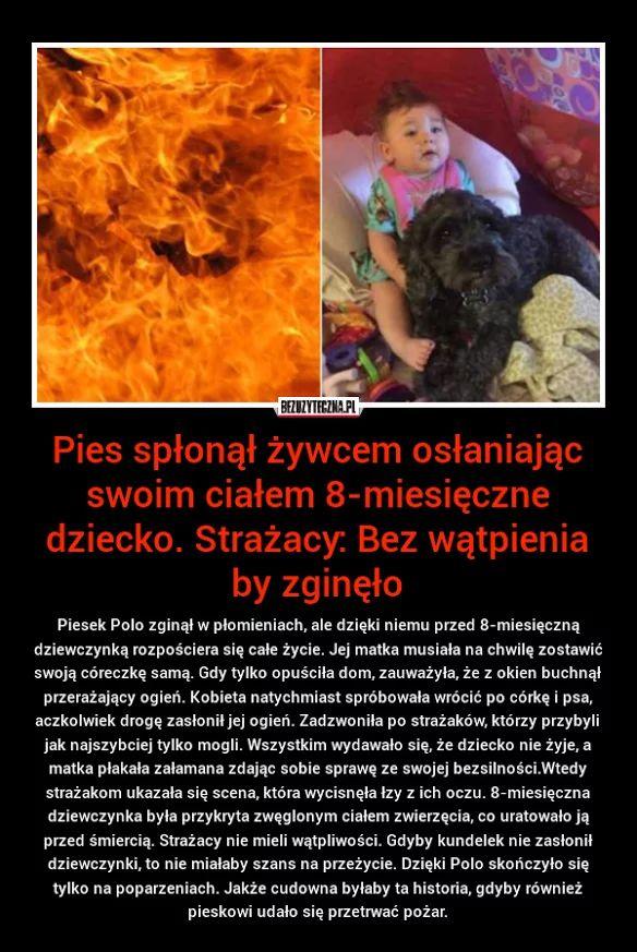 Pies spłonął żywcem osłaniając swoim…