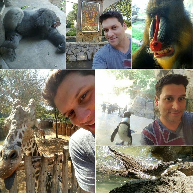 Visited the Dallas Zoo today! Another great day exploring this city. [@DallasZoo #DallasZoo #Dallas #Zoo #zootopia #zootour #ZooAnimals #DallasTX #DallasTexas #DallasTourist #DallasTourism #tourism #tourist #travel #TexasTravel #TexasTravels #travelbug #giraffe #nilecrocodile #Selfie #travelselfie #Gorilla #Gorillas #wanderlust #Texas #TexasUSA]