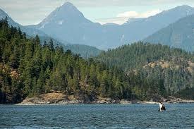 Campbell River, BC. Saw Orca at Browns Bay RV Resort Sept 2013