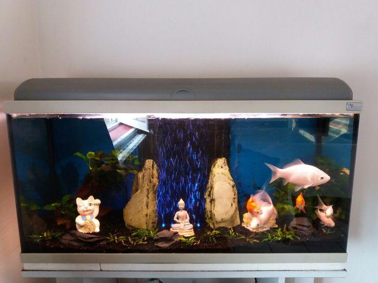 L'idéal pour les poissons rouge c'est d'avoir de la place.  6 spécimens pour 100 litres c'est le grand maximum.
