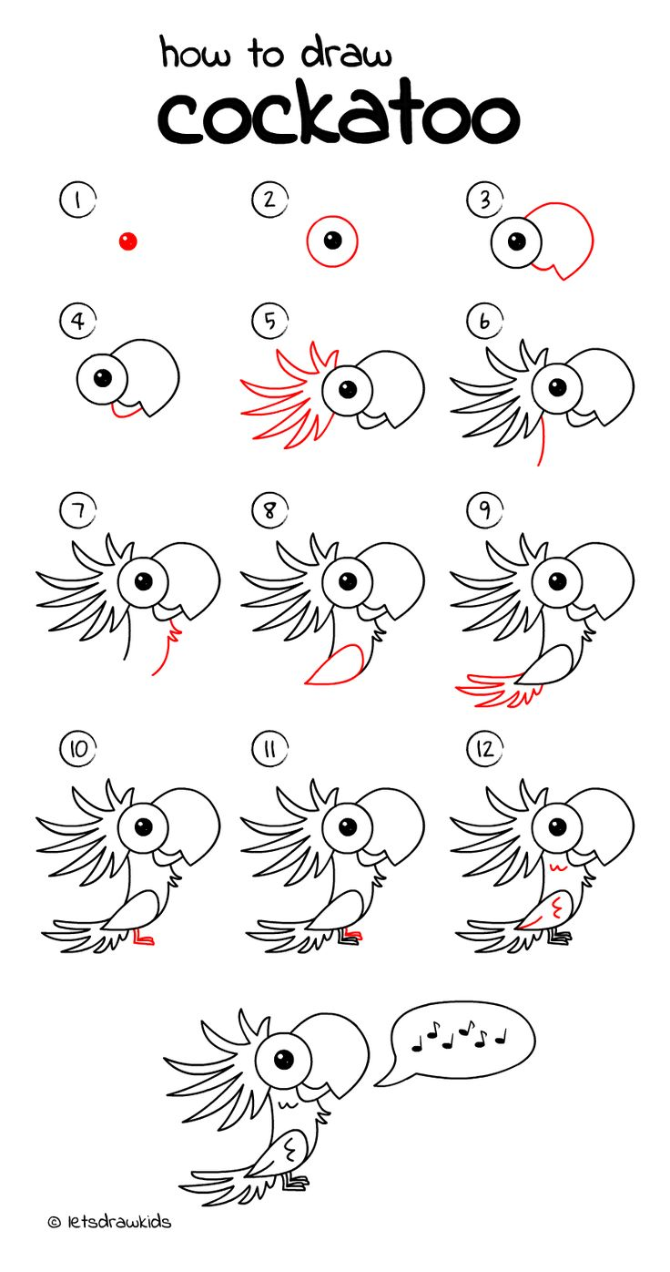 how to draw cockatoo easy drawing step by step perfect for kids