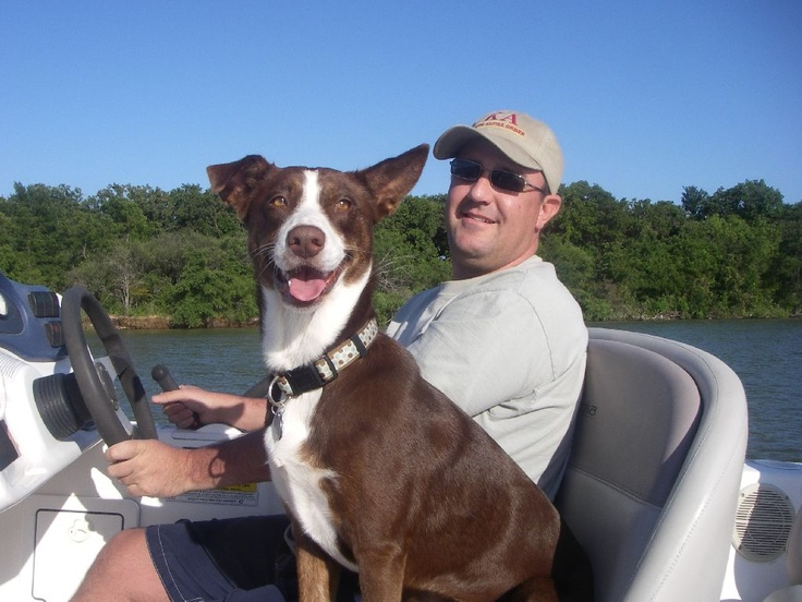 I don't think this dog could be any happier.  Just check out that grin on his face! www.wholesalemarine.com #dog, #pet, #boating, #wholesalemarine: Face, Doggy Smiles, Pet, Www Wholesalemarine Com Dog, Grin