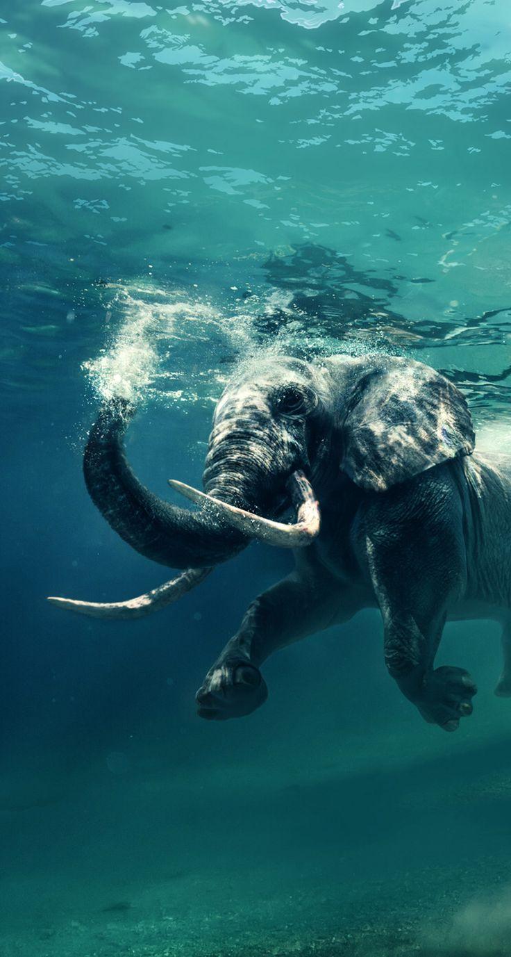 Je nage bien en!🐘🐘🐘🐘🐘🐘🐘