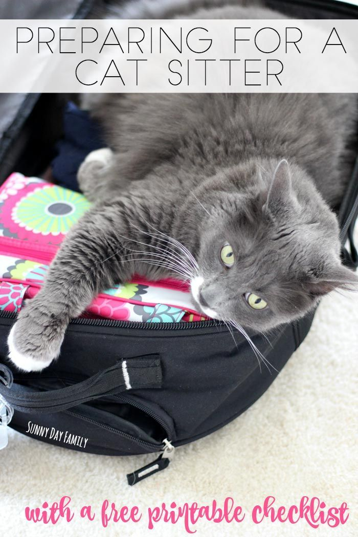 Make sure your cat sitter is prepared with a free printable cat information sheet! Don't leave home without leaving all the important information your cat sitter needs - find it all here in a handy cat sitter checklist!