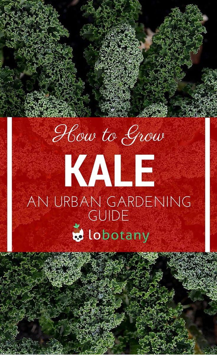 39 best kale images on pinterest veggie gardens organic