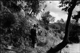 icp 535  Near Troina. August 4th-5th, 1943. American soldiers on a reconnaissance mission to capture Troina, a strategically located hilltown on the road to Messina (Sicily's main port to the mainland). The town was being fiercely defended by the Germans, in an attempt to evacuate all German troops.