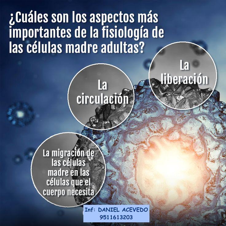 AVANCES CIENTIFICOS HAN DEMOSTRADO QUE LAS CELULAS MADRE ADULTAS DE LA MEDULA OSEA SON EL SISTEMA NATURAL DE RENOVACION DE NUESTRO CUERPO.