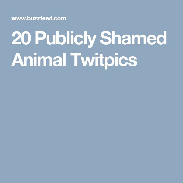 20 Publicly Shamed Animal Twitpics