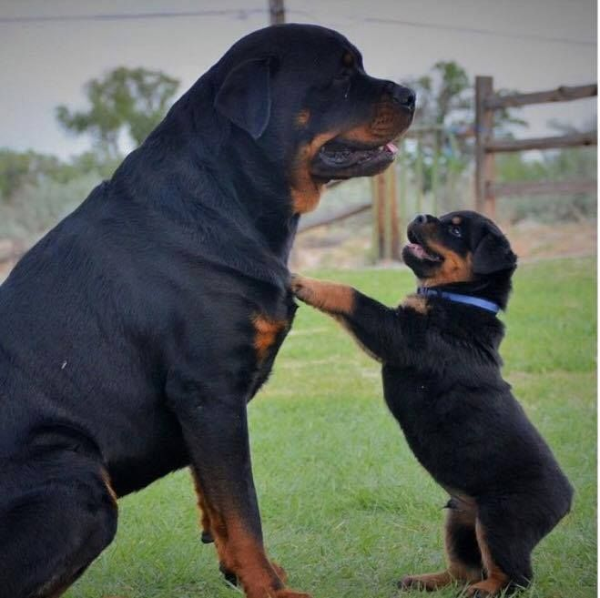 I don't care how big you are, I will take you Down!!!
