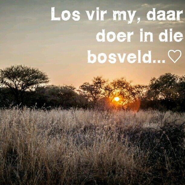 Bosveld Liefde ♡