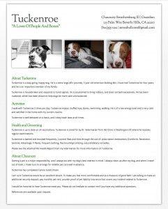 7 best pet resume images on pinterest animal rescue. Black Bedroom Furniture Sets. Home Design Ideas
