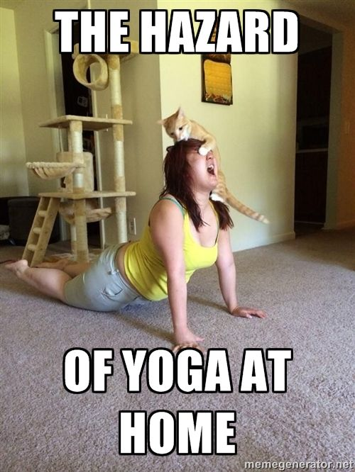 17 Best Images About Yoga Memes On Pinterest Yoga Poses