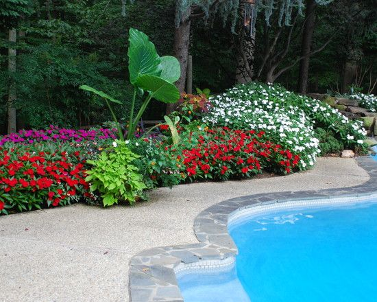 Tropical pool poolside landscape design pictures remodel for Gardens around pools