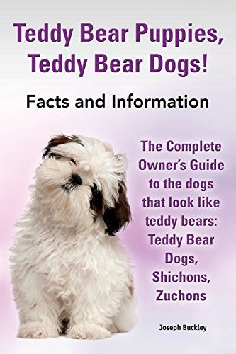 Teddy Bear Puppies, Teddy Bear Dogs! Facts and Information. the Complete Owner's Guide to the Dogs That Look Like Teddy Bears: Teddy Bear Dogs, Shicho - http://www.thepuppy.org/teddy-bear-puppies-teddy-bear-dogs-facts-and-information-the-complete-owners-guide-to-the-dogs-that-look-like-teddy-bears-teddy-bear-dogs-shicho/