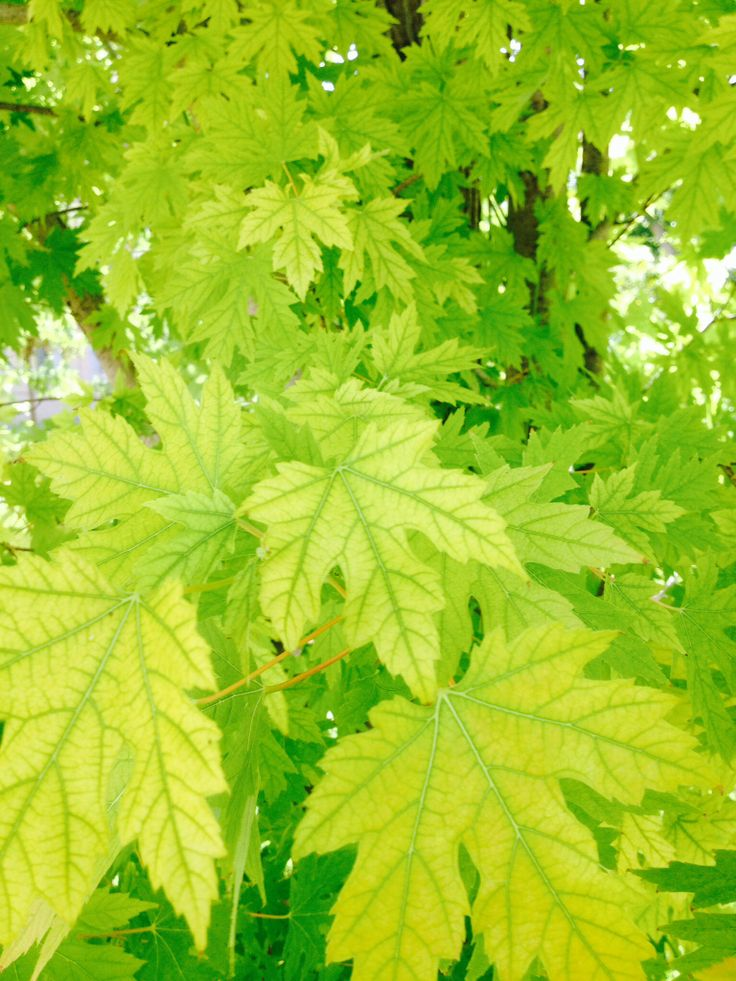 21 best hojas images on pinterest leaves gardening and for Arboles de hoja caduca