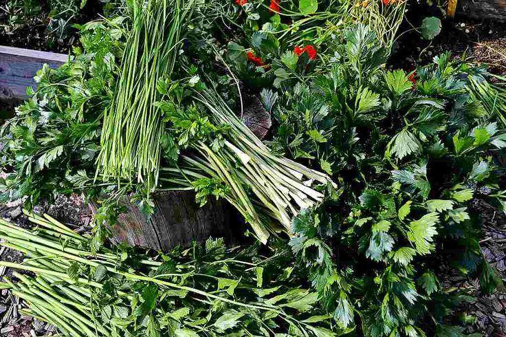 Under säsongen matar jag frysen med påsar av grönsaksblast och halvskruttiga grönsaker som sedan blir grönsakspulver en dag då jag har tid.