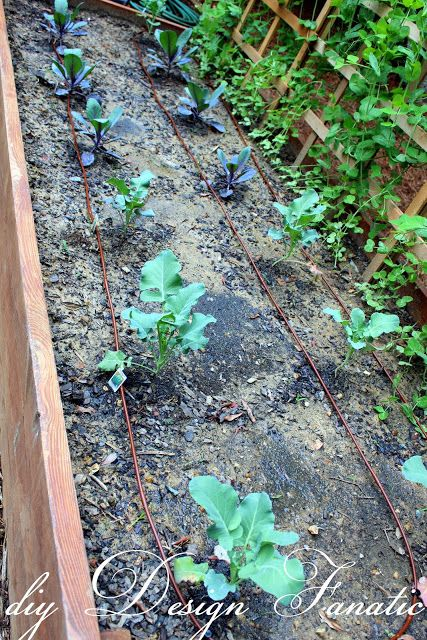 how to make drip irrigation model