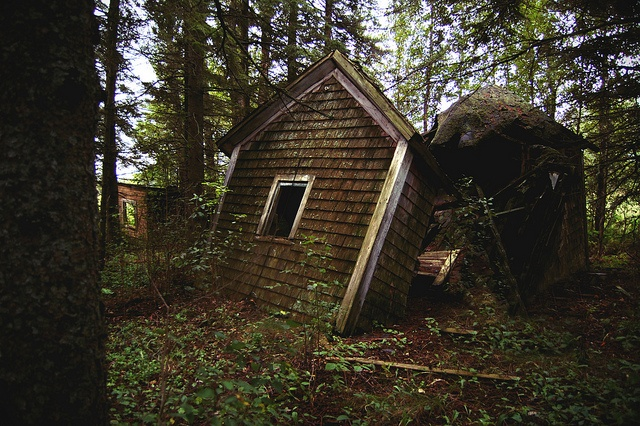 untitled by tinyearthquakes on Flickr.: Hawks Brower, Photos, Abandoned Memories, Grey Hawks