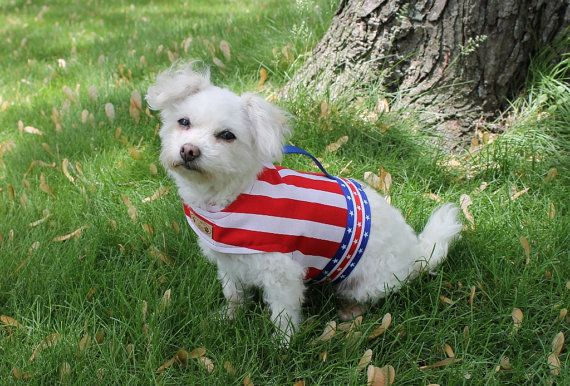 4th of july dog dresses