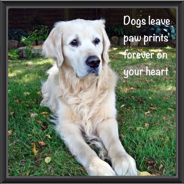 My old dog Nuser❤️ I miss you & love you forever❤️