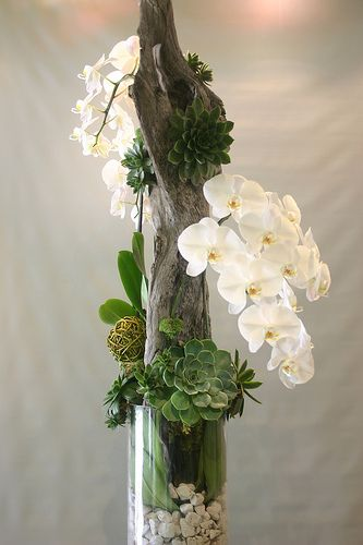 Orchid & succulents