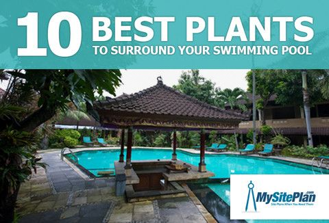 Pool landscaping ideas 10 best plants to surround your for In ground pool surround ideas