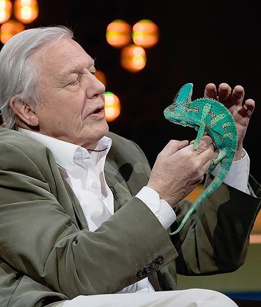 "On popular British TV show, ""The Jonathan Ross Show,"" Sir David Attenborough looks intrigued as he pets a stunning chameleon."