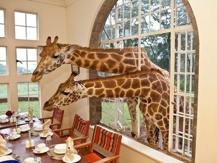 Giraffe Manor resort in Kenya - 25 Amazing Hotels around the world via Bored Panda
