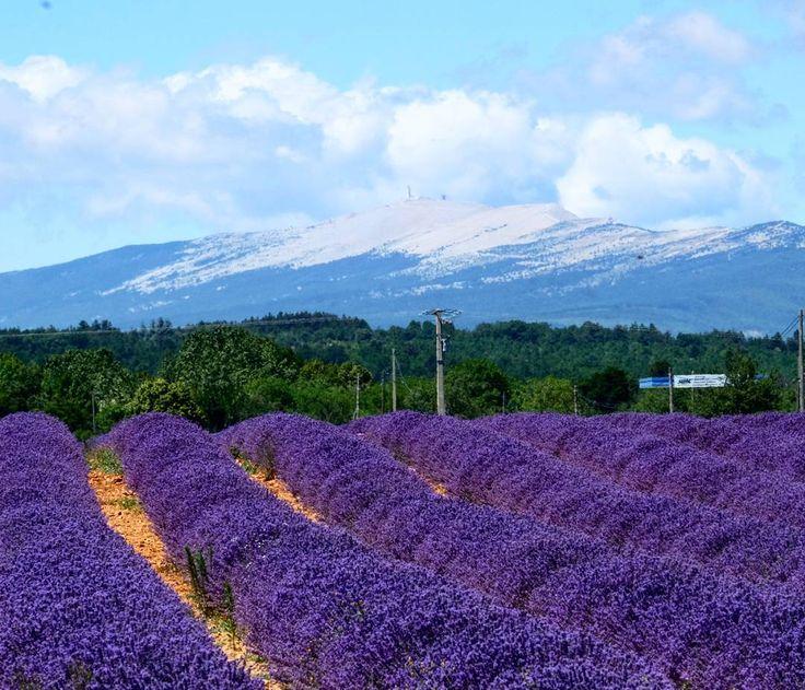 Le Géant de Provence,  le Mont Ventoux.  Мон-Ванту. Еще одна знаменитая…