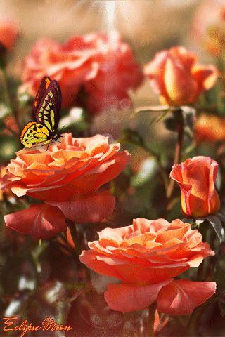 papillon gif