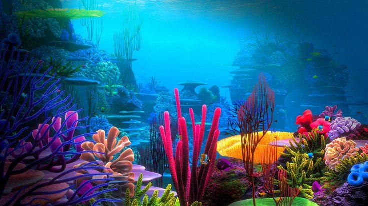 Коралловая сказка - Наука и жизнь