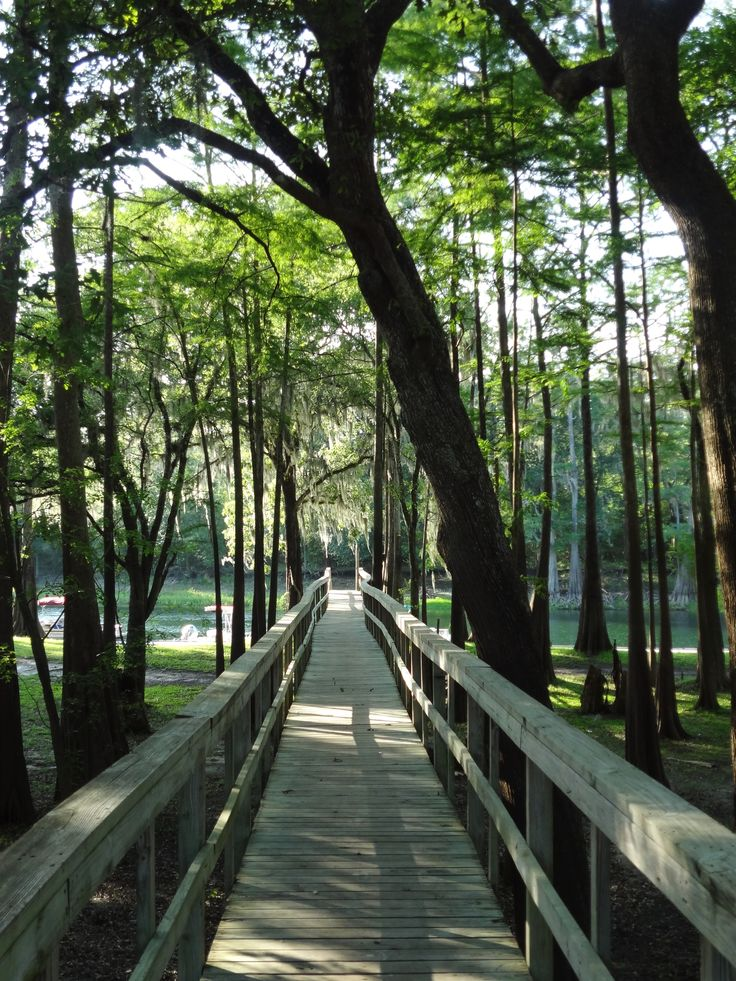 Covered walk way to Ellie Ray's private boat ramp! Access