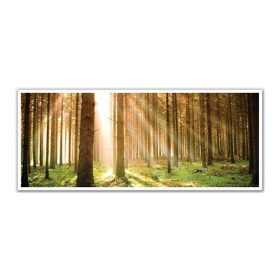 J.P. London Design, Inc. PAN5250 uStrip Heavenly Sunbeams Shine in Forest High Resolution Peel and Stick Removable Wall Mural