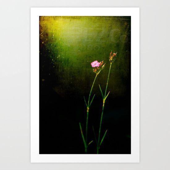 Seeking light Art Print by Silvia Ganora  #wallart #flowers #atmospheric #homedecor #prints   (scheduled via http://www.tailwindapp.com?utm_source=pinterest&utm_medium=twpin)