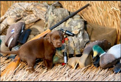 Duck hunting gear the essentials.