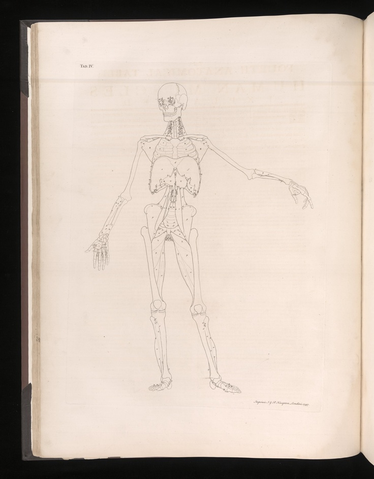 39 best Tables of the Skeleton and Muscles of the Human Body images ...