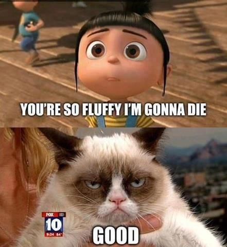 Grumpy Cat... so fluffy
