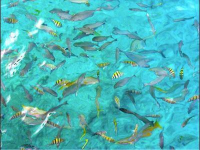 La Piscinita - San Andrés Islas - Colombia http://www.sanandresislas.com.co/la-piscinita-san-andres