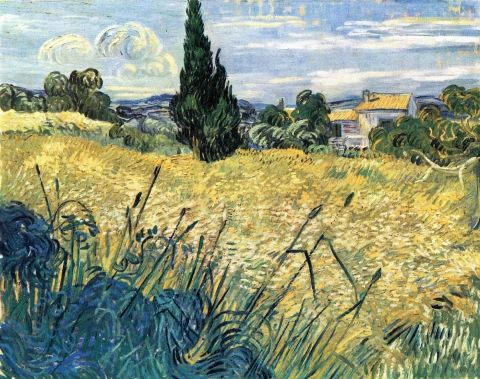 Campo verde di grano con cipressi