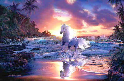 Paisagem de cavalo branco cavalgando nas águas do mar #cavalos cavalo branco cavalo mar cavalo praia cavalo paisagem cavalo por do sol