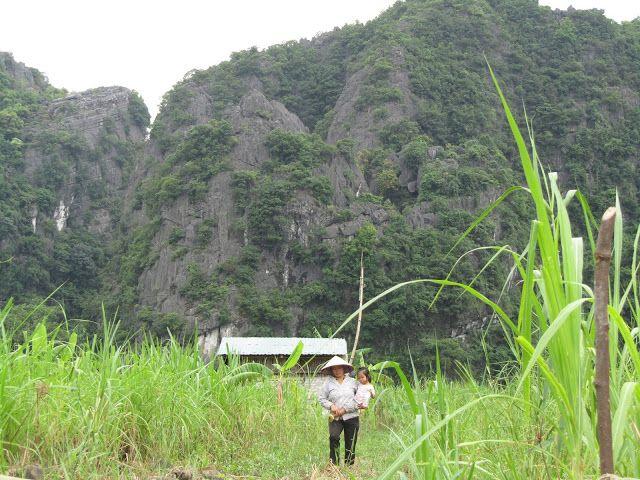 Viajando como una pluma: Ninh Binh: entre flores de Loto, nenúfares, cuevas...
